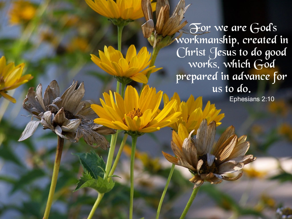Picture Quote On Ephesianns 210 Niv: Sunshine's Reflections Blog